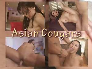 Oriental Cougars Collection